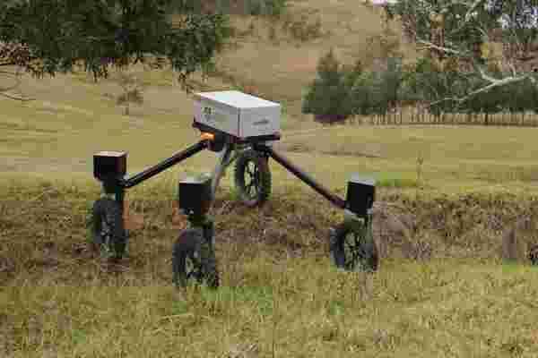 没有公牛! 这个机器人可以让牛仔失业。
